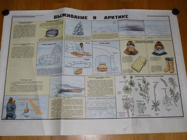 Přežití v Arktidě - výukový obraz - plakát