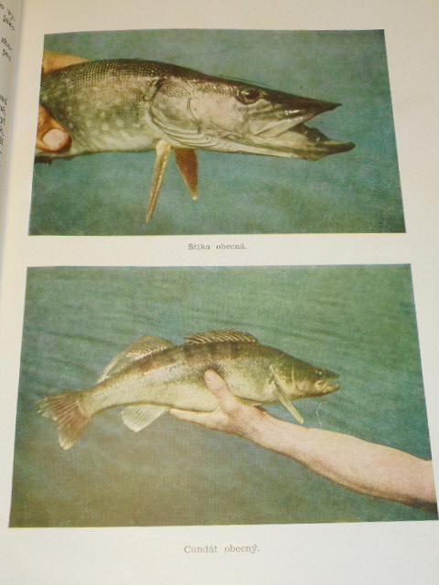 Rybářství na tekoucích vodách - Zdeněk Šimek - 1954