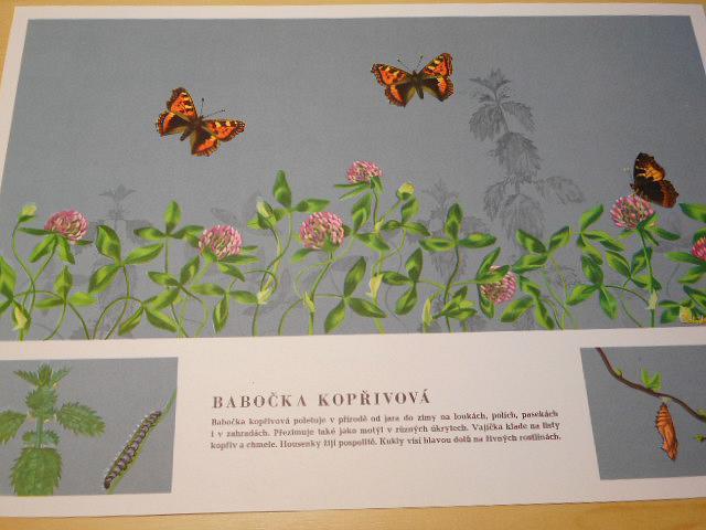Motýli - Antonín Altmann, Edita Plicková - 1967