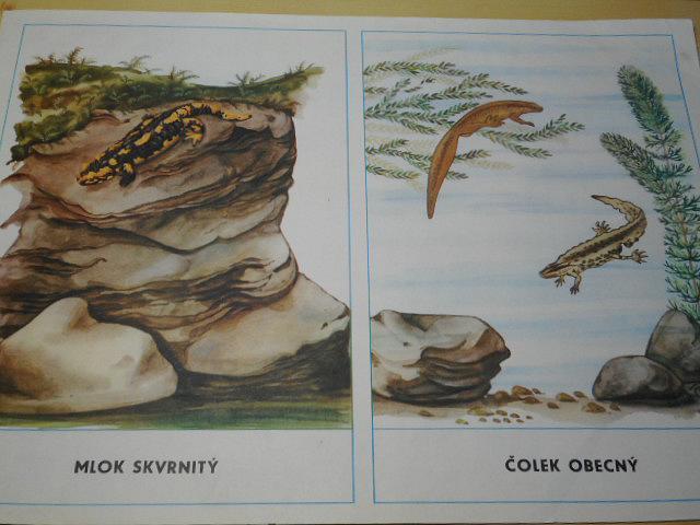 Ryby, obojživelníci, plazi - Antonín Altmann, Edita Plicková - 1968