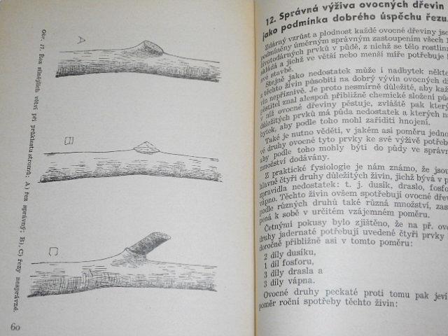 Řez ovocných stromů a keřů - František Petr - 1936