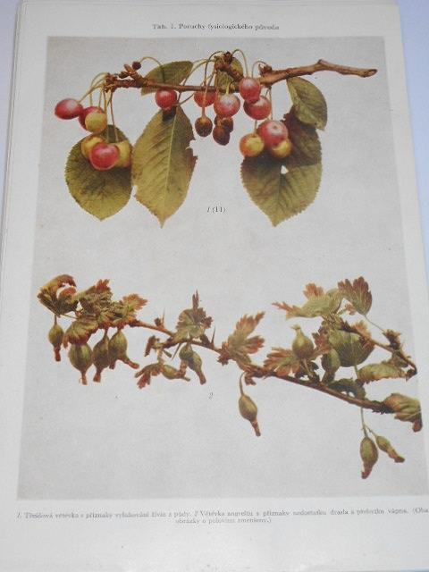 Choroby a škůdci ovocných rostlin - Ctibor Blattný, Bohumil Starý, Josef Nedomlel - 1956