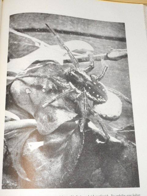 Ilustrovaný život zvířat - díl pátý - bezobratlí - díl I. - Václav Breindl, Otto Jírovec, Julius Komárek - 1943