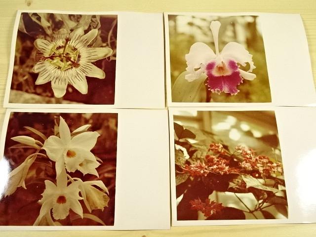 Květy - fotografie