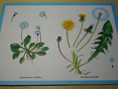 Květiny - lesní - luční - polní - Antonín Altmann, Edita Plicková - 1970